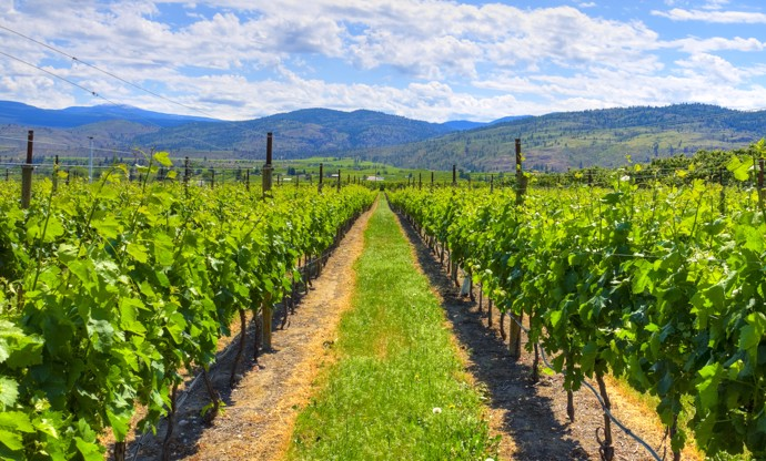 The wines of British Columbia