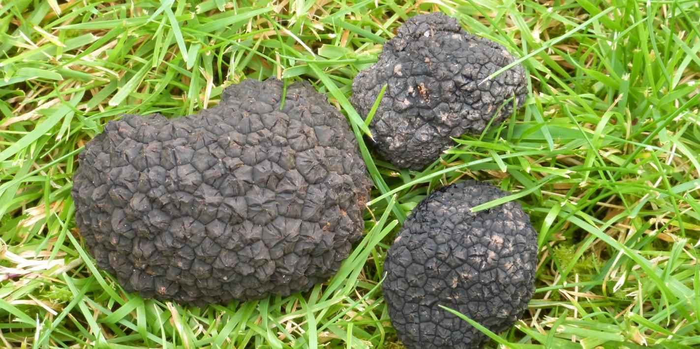 English truffles