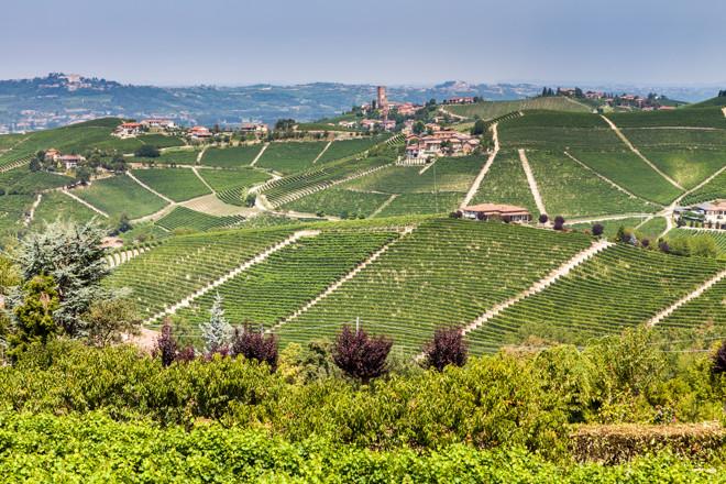 The wines of Piedmont