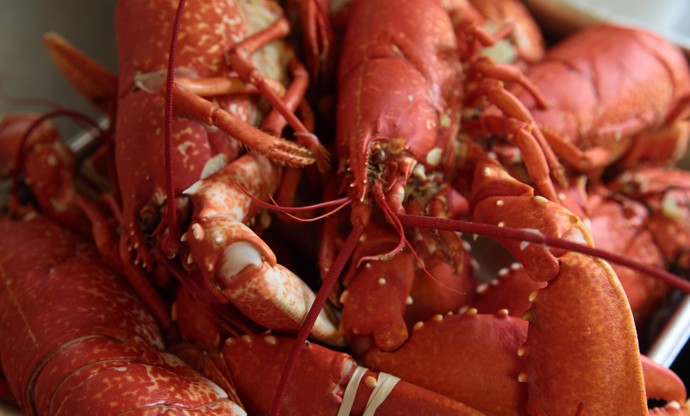 How to cook lobster