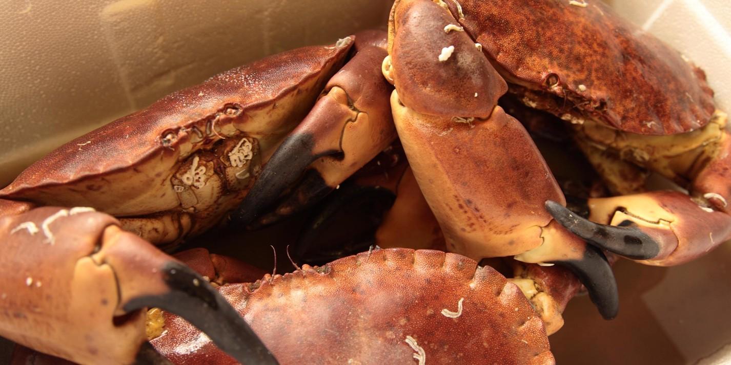 Fort on food: shellfish