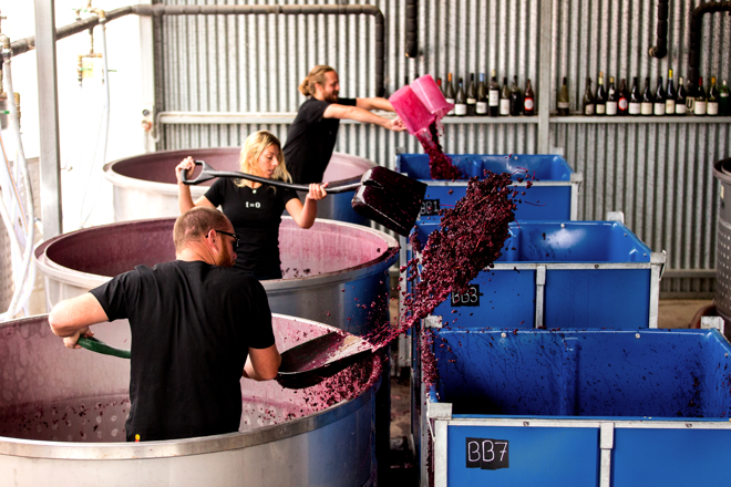 Black Flag: winemaking without limits