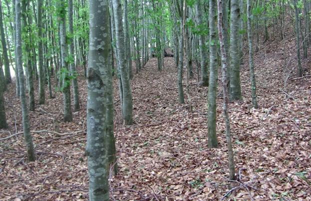 Truffle wood