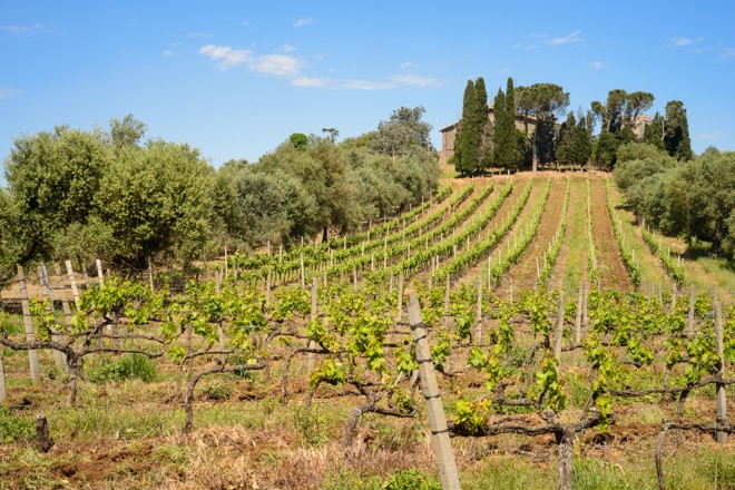 The wines of Lazio