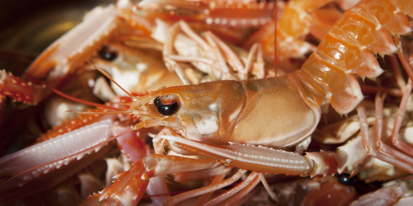How to cook langoustine