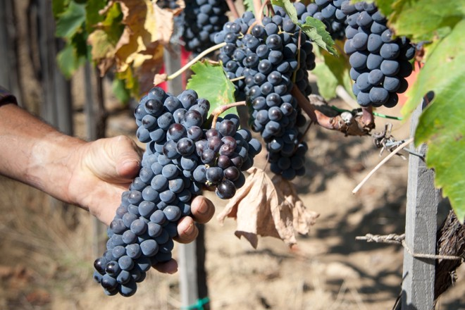 A guide to Italian wine classifications