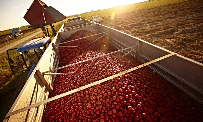 Cirio: Italy's most loved tomatoes