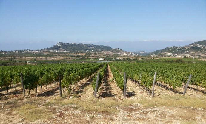 Chateau Bargylus: Syria's vineyard
