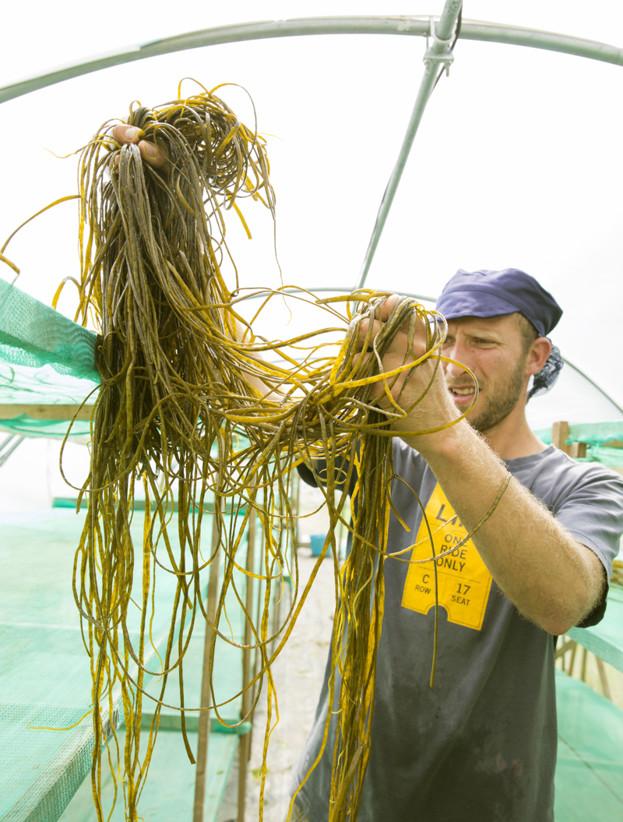 Joe inspecting the sea spaghetti