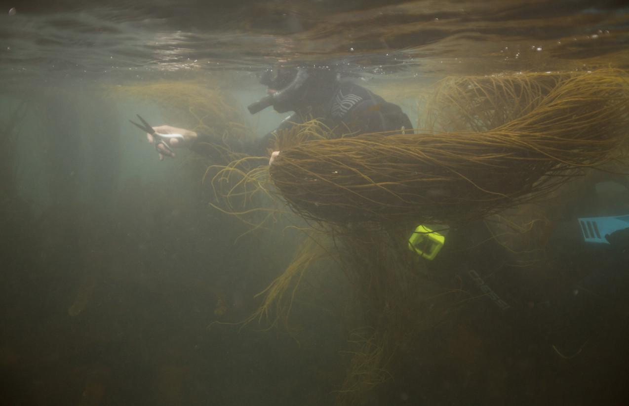 Cornish Seaweed Co