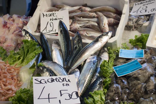 Fish of the Venetian lagoons