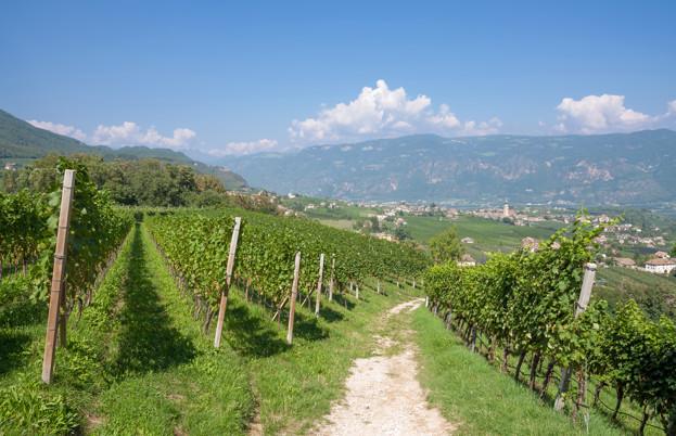 Wine trails