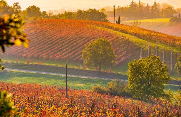 Lambrusco vineyards