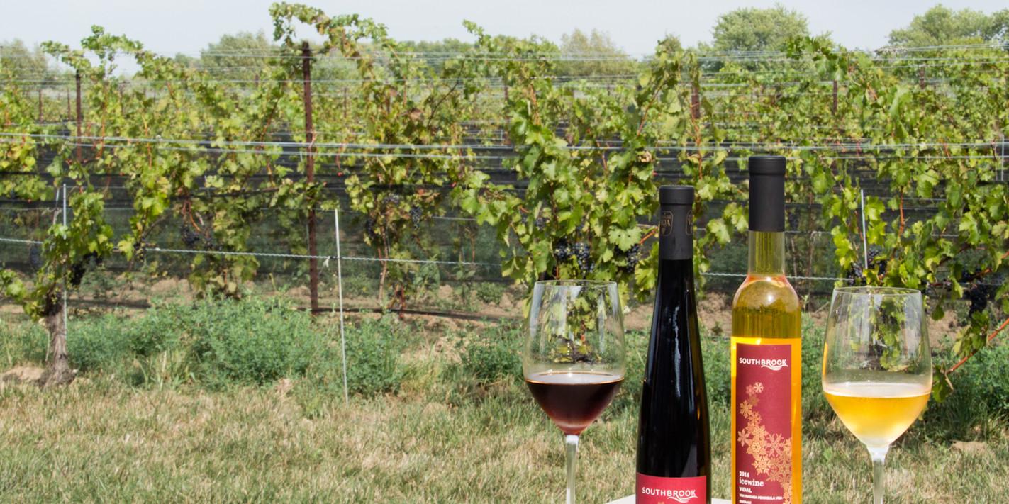 An ice wine pilgramage in the Niagara Peninsula winelands